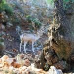 Спрятавшийся олень