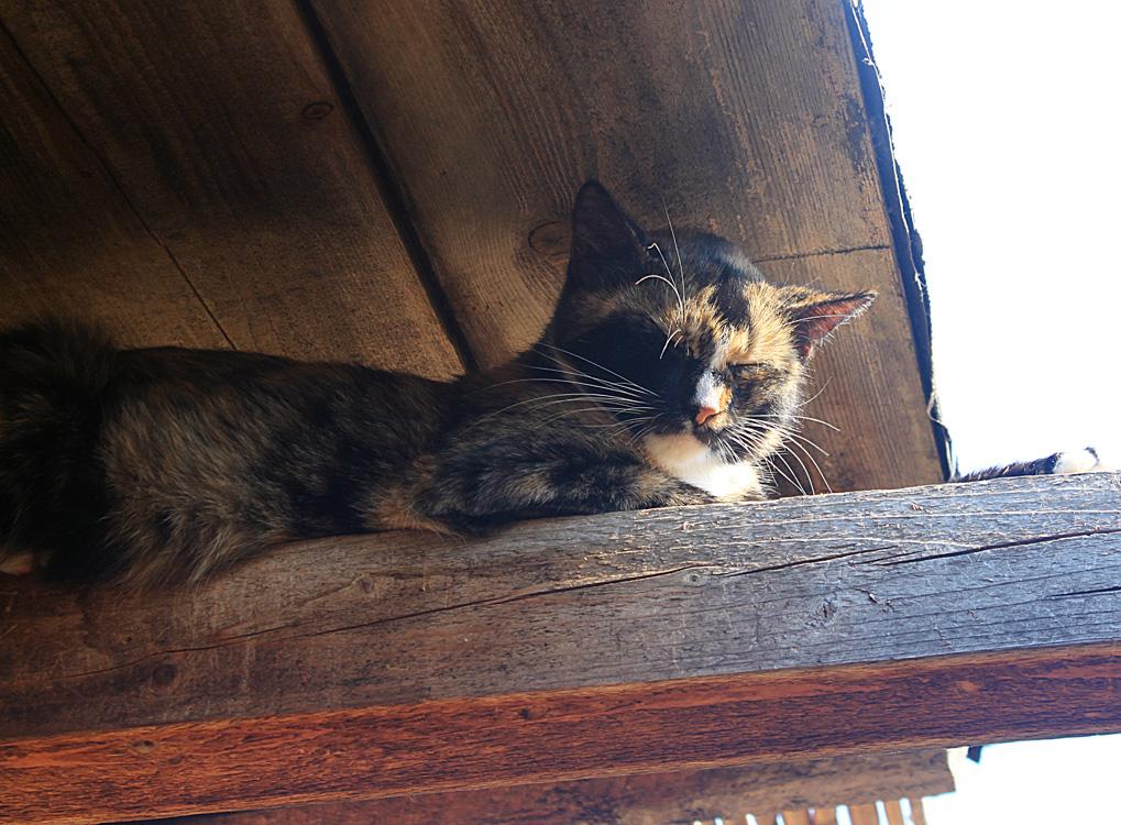 Солнечные ванны кошки