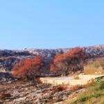 Выгоревший лес