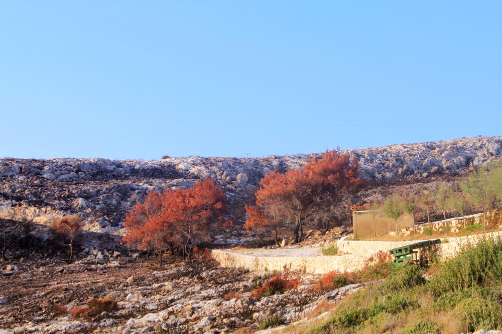 Выгоревший лес в Порто Лимнионас