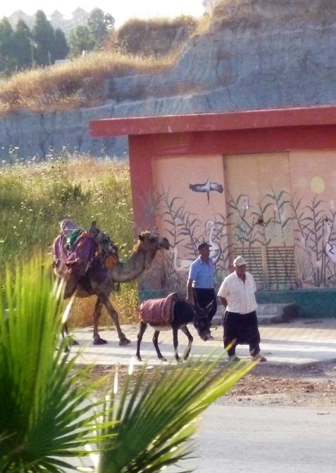 Верблюд и осёл
